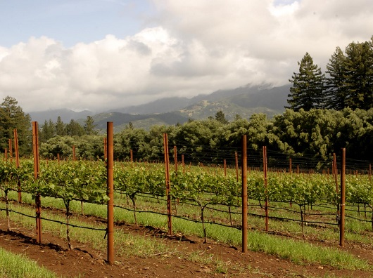 Napa Valley Cabernet: If You Think It's All Alike, Think Again