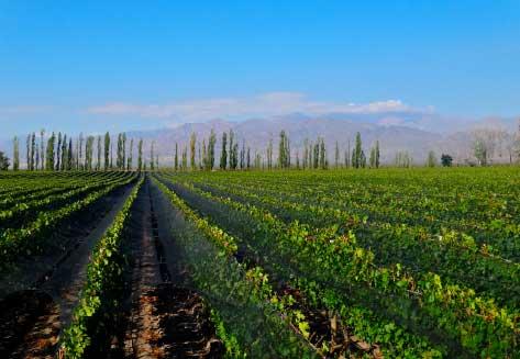 Nicasia Vineyard, San Carlos, Argentina