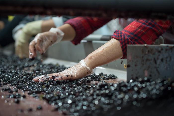 sorting napa valley cabernet sauvignon