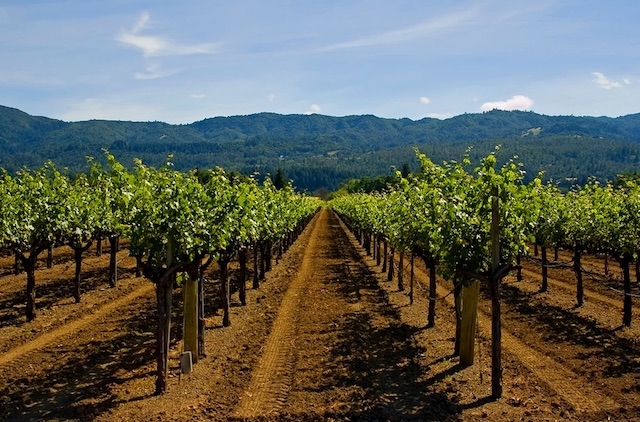 The Ultimate Guide to Essential Napa Valley Wines for Your Collection