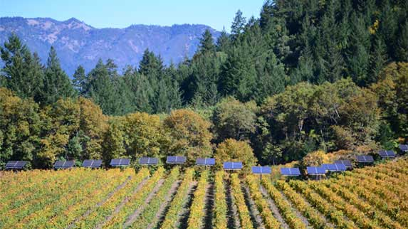Keenan Mailbox Merlot vineyard